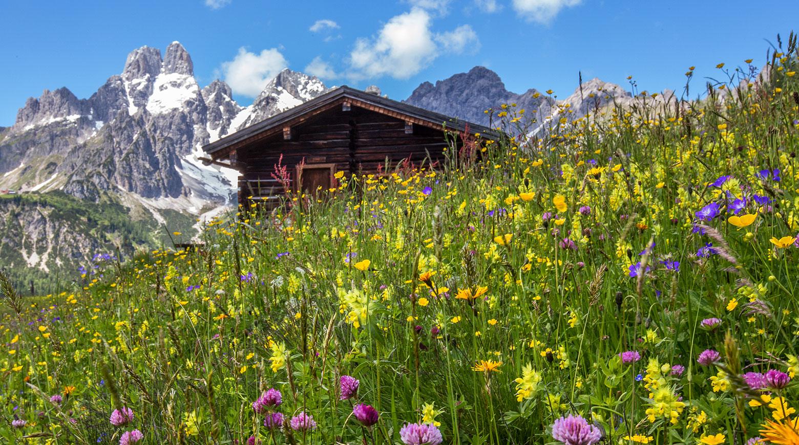 Sommerurlaub in Filzmoos, Salzburger Land